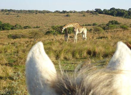 Tag 7-Südafrika Wild Coast Reitsafari Tag 7