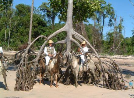 Tag 7-Amazonas Marajó Palmwurzeln