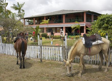 Tag 4-Amazonas Marajó Fazenda u. Pferde