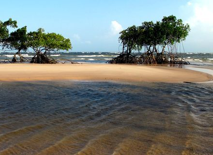 Tag 1-Amazonas Marajò Insel