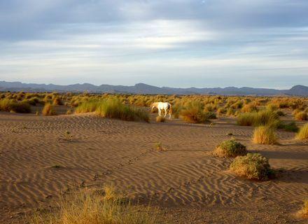 Tag 10 - 24.03.2020  Wüstentäler-Marokko Tafilalet Wanderitt Tag 10