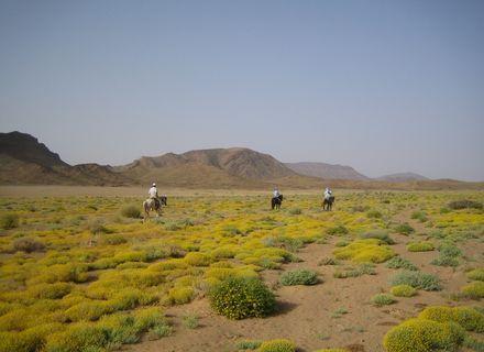 Tag 6 Foggara -Wanderritt Oasen & Sanddünen Tag 6