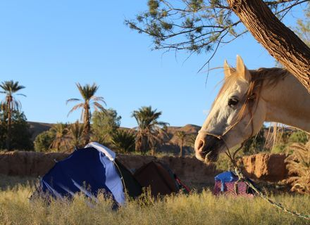 Tag 11 - 25.03.2020  Palmenhaine-Marokko Tafilalet Wanderitt Tag 11