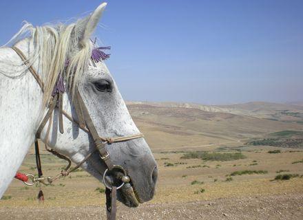 Tag 1  Anreise nach Rabat  -Marokko Königsstädte