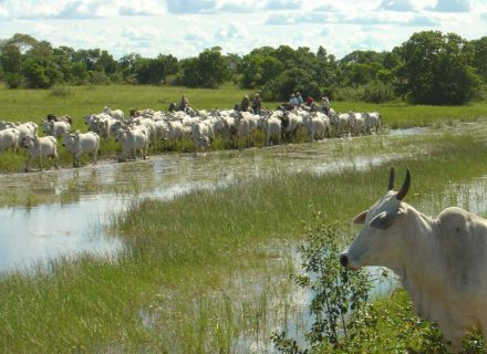 Tag 2 Fazenda Aguapé-