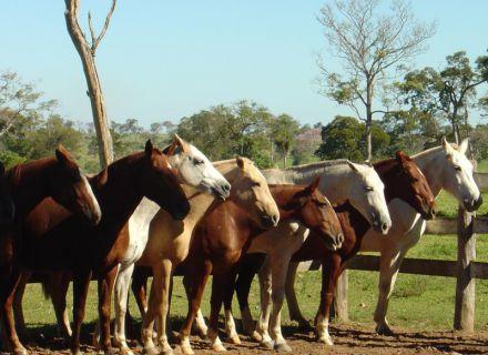 Tag 1 Anreise Fazenda Aguapé-