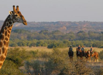 Tag 2 Camp Two Mashatus – Wilderness Camp-Begegnung mit Giraffe