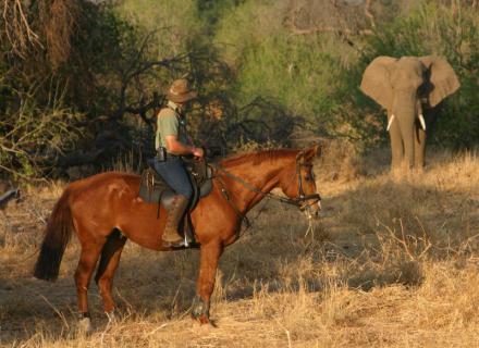 Tag 5 Camp Kgotla – Wilderness Camp-Reiter und Elefant Auge in Auge