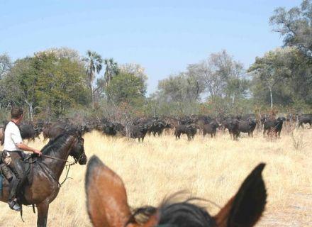 Tag 11 Camp Macatoo – Abreise-Reiter und Büffelherde