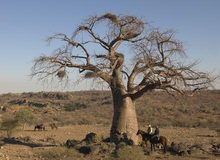 Tag 6 Wilderness Camp - Camp Two Mashatus-Reiter unter Baobab Baum