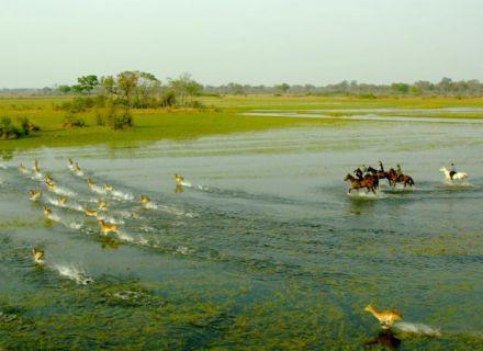 Tag 5 Mokolwane - Kujwana  -in den Flutebenen mit Letschwe Antilopen