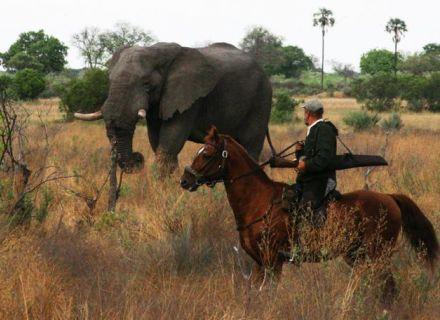 Tag 9 Fly Camp - Kujwana-Reiter und Elefant