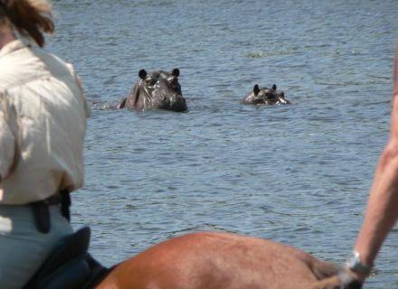 Tag 7 Kujwana -Flusspferde im Pool