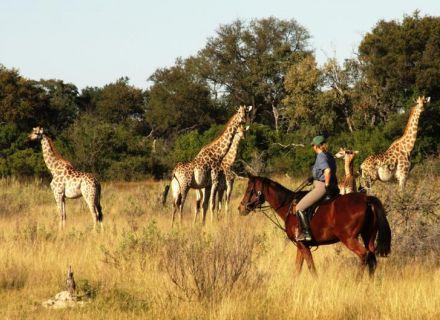 Tag 10 Kujwana-Begegnung mit Giraffen