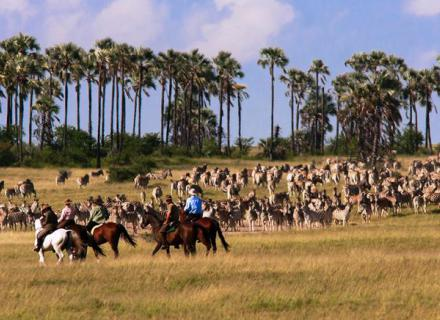 Tag 3 Camp Kalahari – Xau Xai Fly Camp-
