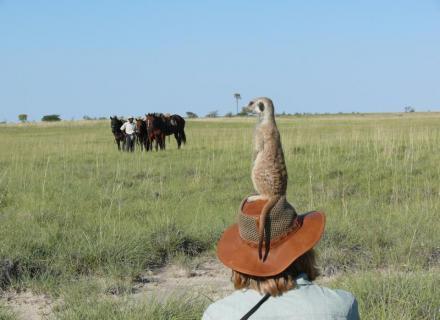 Tag 4 Meerkat-