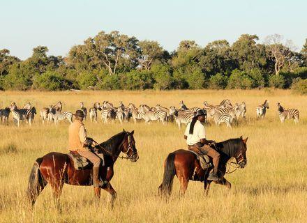 -Reiter und Zebras