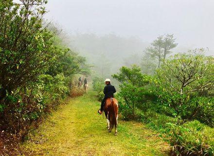 Tag 8-Ritt in den Nebelwald