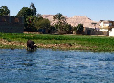 Tag 2 Nil und Beduinen -