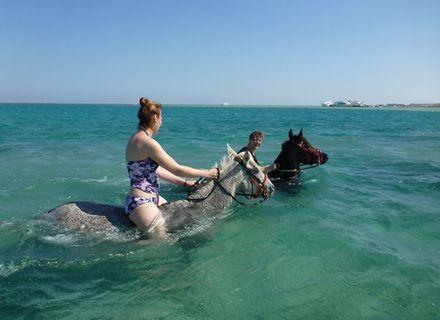 Tag 8 Schwimmen mit den Pferden und Abreise-Schwimmen im Roten Meer