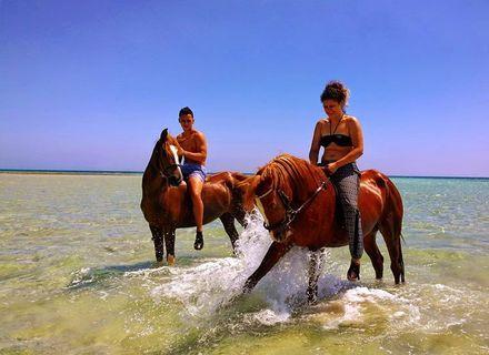 Tag 8 Schwimmen mit den Pferden-