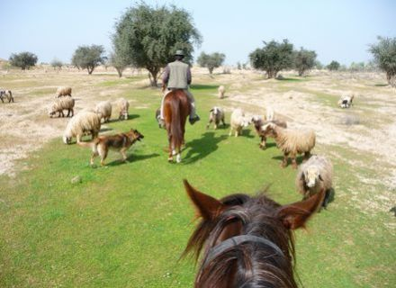 Tag 11 / 27. Februar / Aghili Farm - Dezful-
