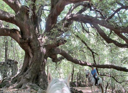 Tag 2  Castelbuono - Geraci Siculu-Sizilien - Wanderritt von Cefalù zum Vulkan Ätna