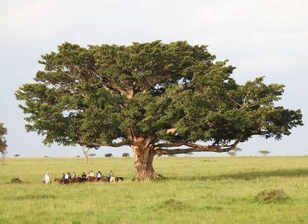 Tag 6 - Olare Lamun Camp -Kenia Reitsafari Maasai Mara Conservancies