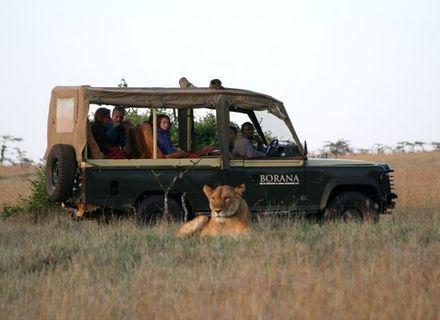 Tag 5-Borana Pirschfahrt mit Löwe
