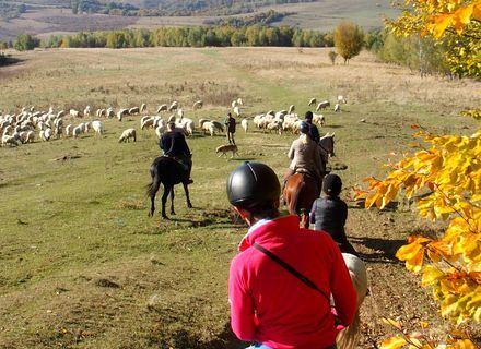 Tag 5 - Zalánpatak -Wanderritt Rumänien - Begegnung mit Schäfern