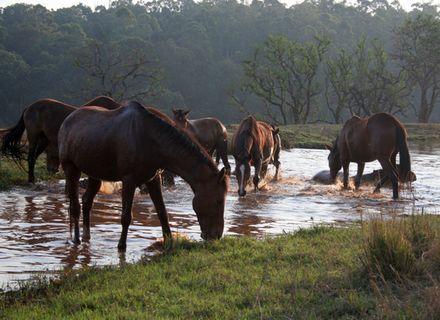 Tag 10 - Abreise-Eswatini Pferde am Wasserloch