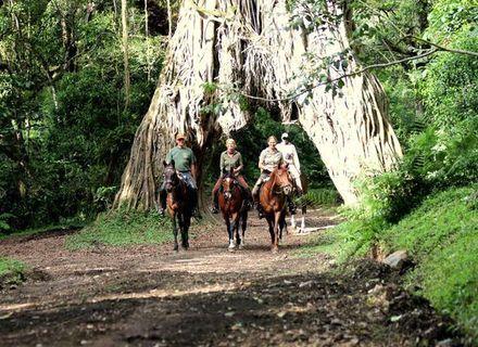Tag 2 & 3   Arusha Nationalpark -Arusha Nationalpark Feigenbaum