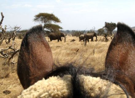 Tag 6  Out of Africa Feeling -Blick durch die Pferdeohren