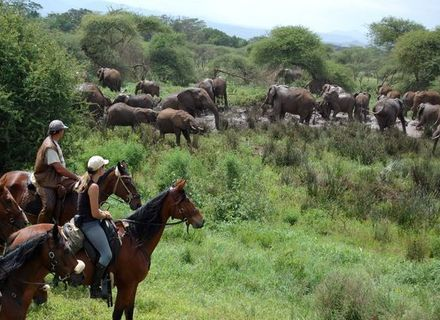 Tag 7  Bergregenwald am Kilimanjaro-Elefanten im Bergwald