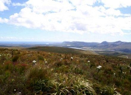 Tag 6 Witkrans Farm - Farm 215-Fynbos Landschaft