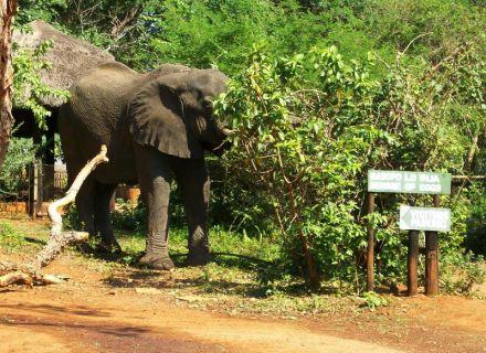 Tag 1-Simbabwe Einfahrt zum Reiterhof