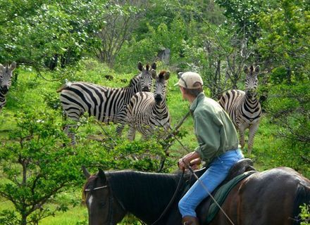 Tag 2 -Sternritte Victoria Falls Reiter mit Zebras