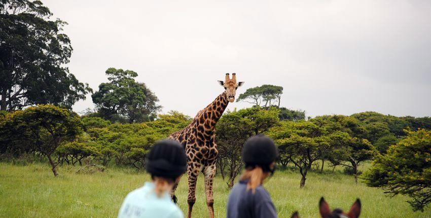 Südafrika - Wild Coast Wanderritt & Reitsafari