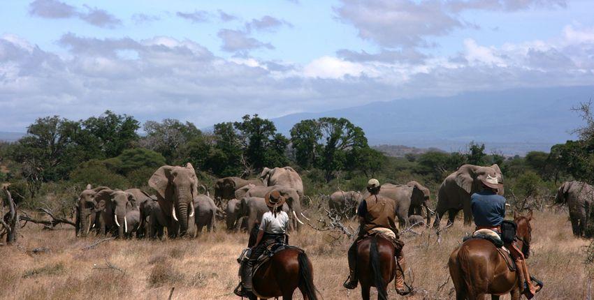Reitsafari zwischen Kilimanjaro und Meru
