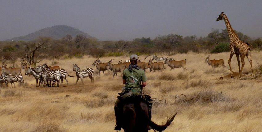 Tansania - Reitsafari Süd-Amboseli