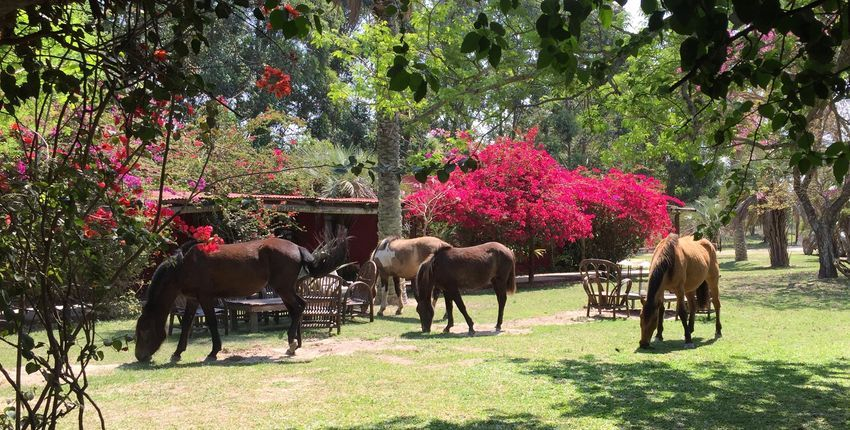 Pferde im Garten der Estancia
