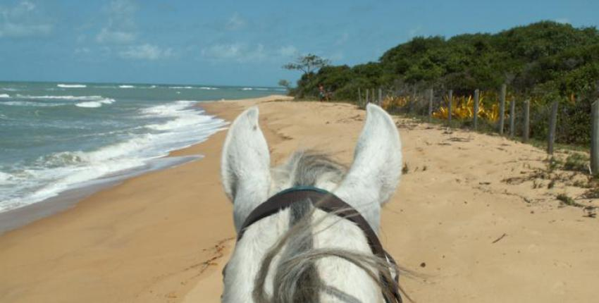 Wanderritt im Strandparadies von Bahia