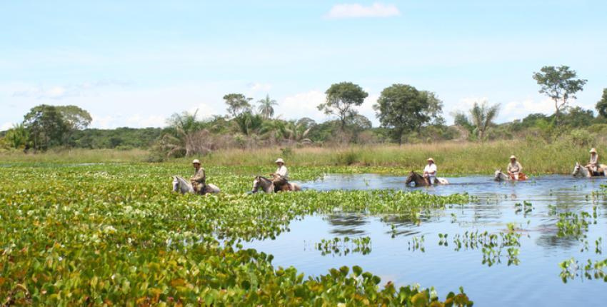 Wanderritt durch den Pantanal