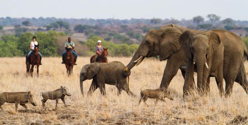 "Reitsafari Spezial ""Das Beste von Botswana"""