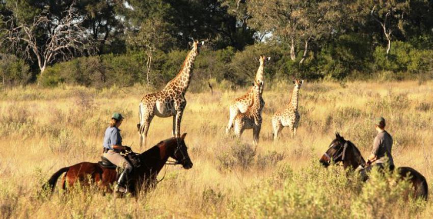 Reitsafari Kujwana im Okavango Delta