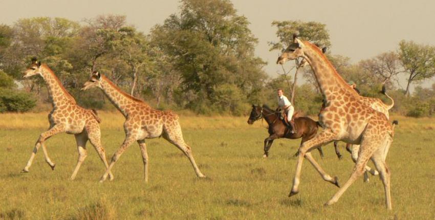 Reitsafari Qwaapo im Okavango Delta
