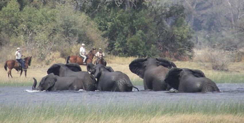 Reitsafari Mokolwane im Okavango Delta