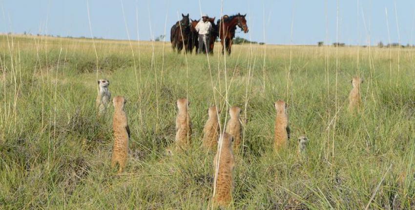 Reitsafari in den Makgadikgadi Salzpfannen