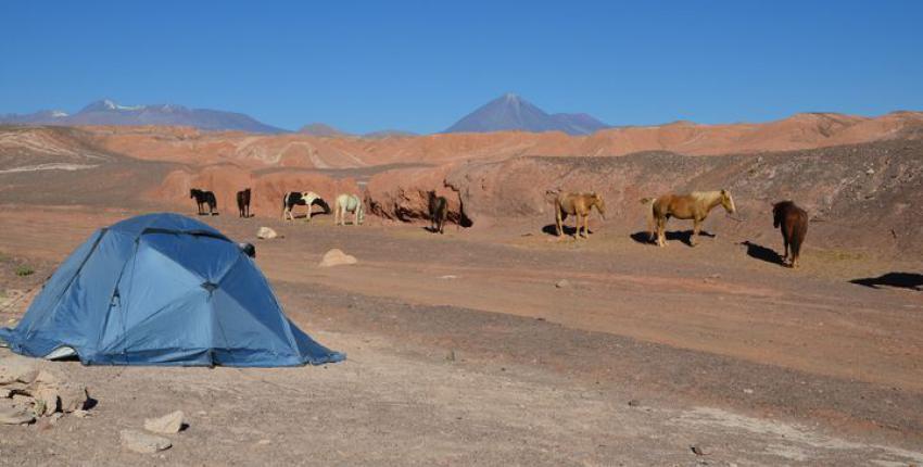 Abenteuer-Ritt durch die Atacama Wüste