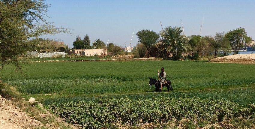 Reiturlaub in Luxor und an der Makadi Bucht